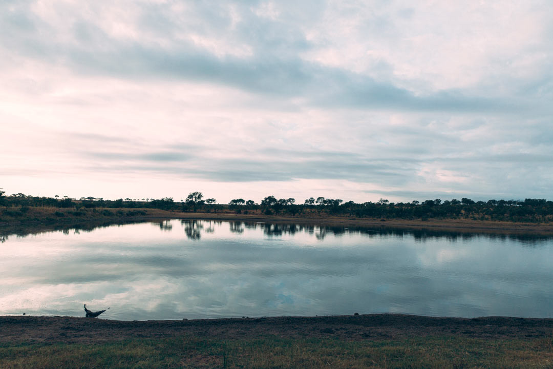 Early morning in Kruger National Park. A few minutes after this picture was taken, we found a flock of hippos hiding in the water.