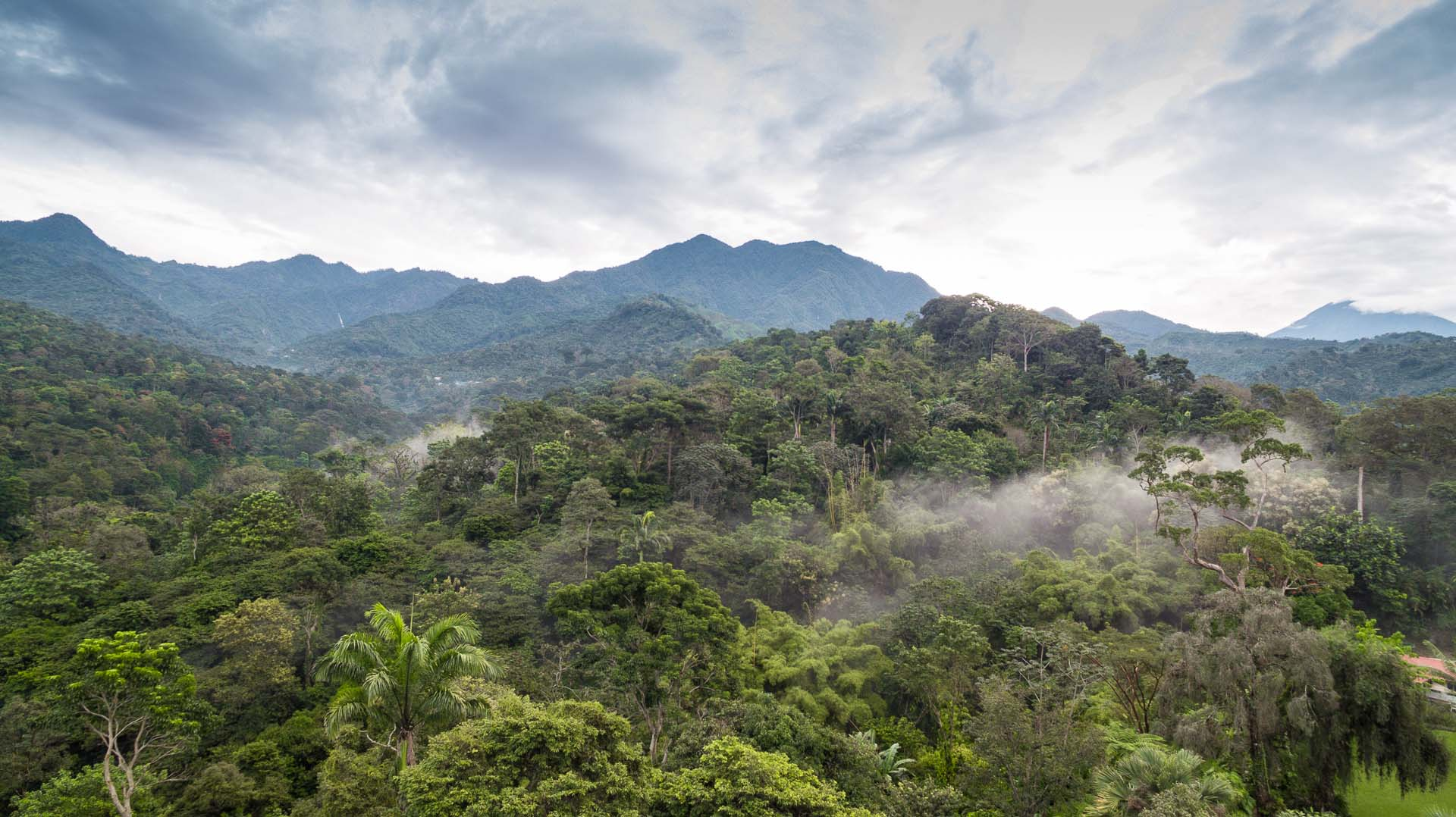 Flying over the dense jungle with my drone was exhilarating!