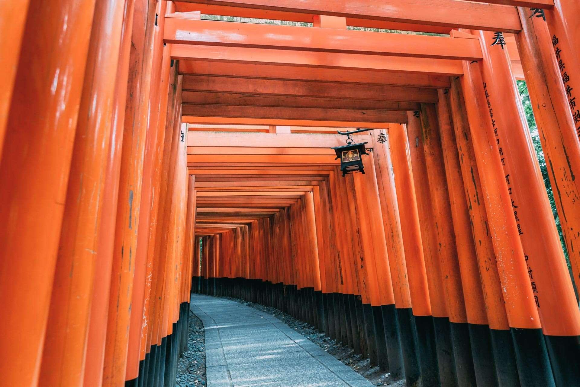 Stribevis af toriier lidt uden for Kyoto.