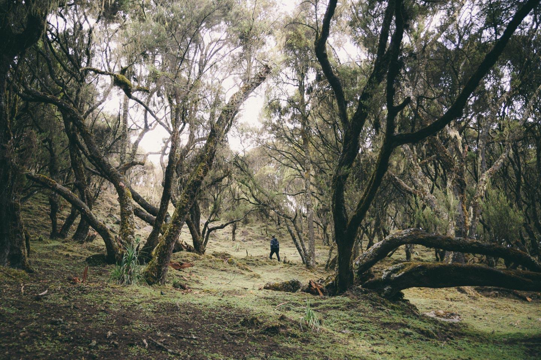 Vild skov på bjergsiden 🌳
