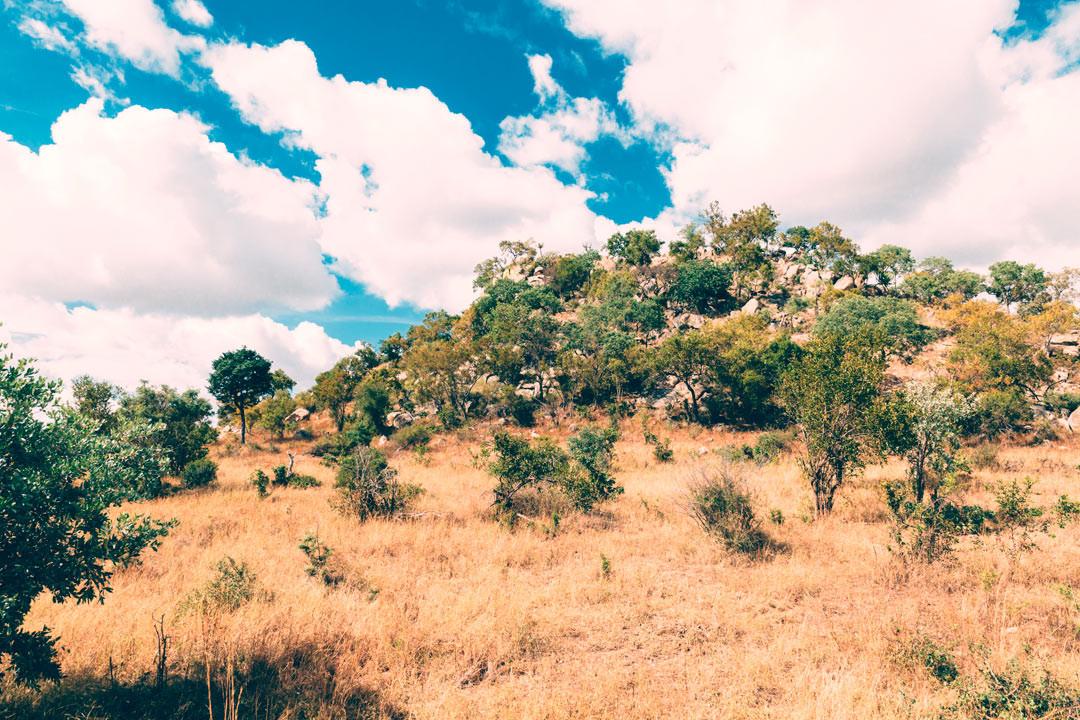 Kruger National Park.