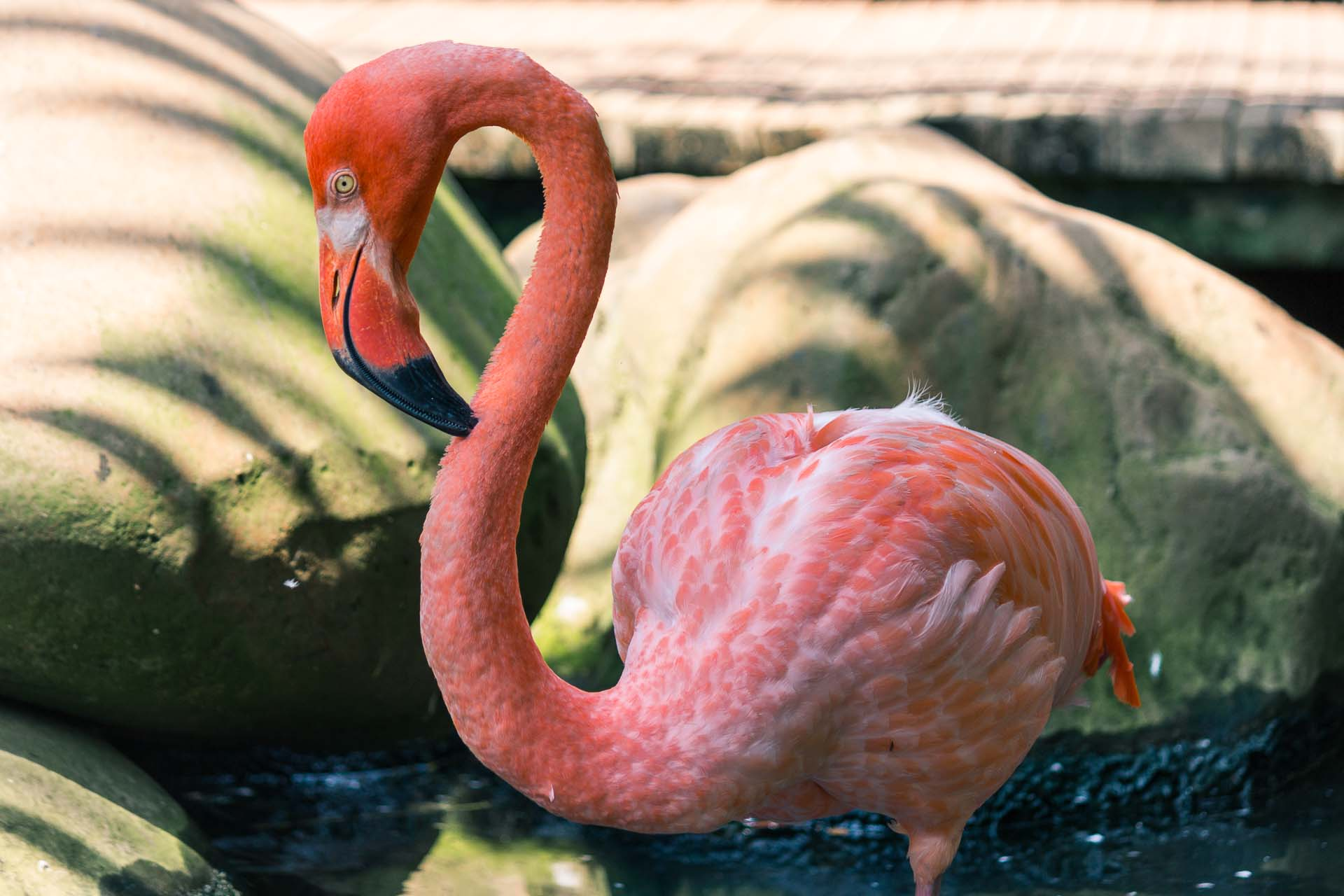 A flamingo at Yumka, a safari/interactive zoo close to the city.